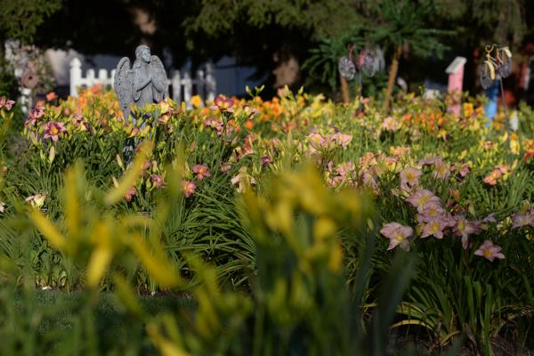 WoodcrestDaylilies2016_072