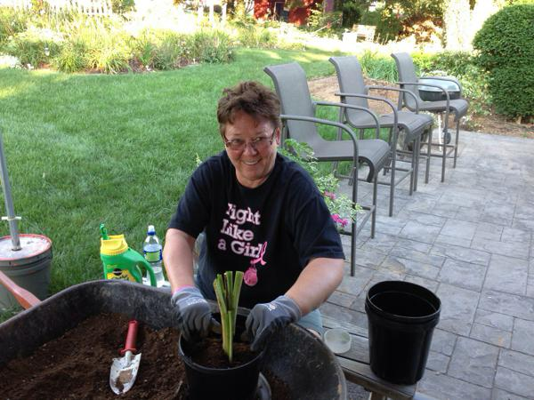 Dee potting daylilies for our inventory