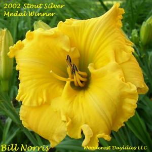 Bill Norris - 2002 Stout Silver Medal Winner