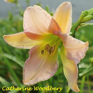 Catherine Woodbery