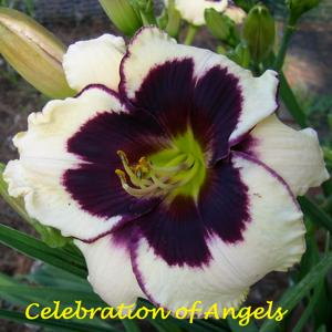 Celebration of Angels