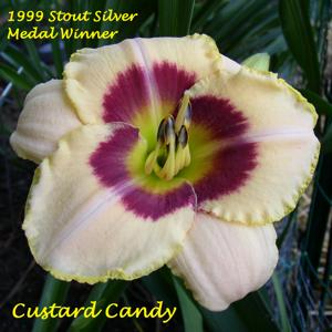 Custard Candy - 1999 Stout Silver Medal Winner