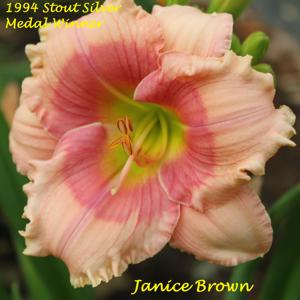 Janice Brown - 1994 Stout Silver Medal Winner