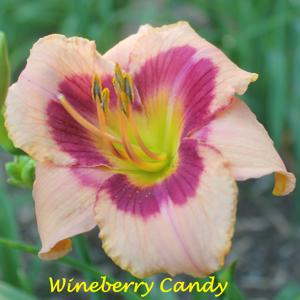 Wineberry Candy