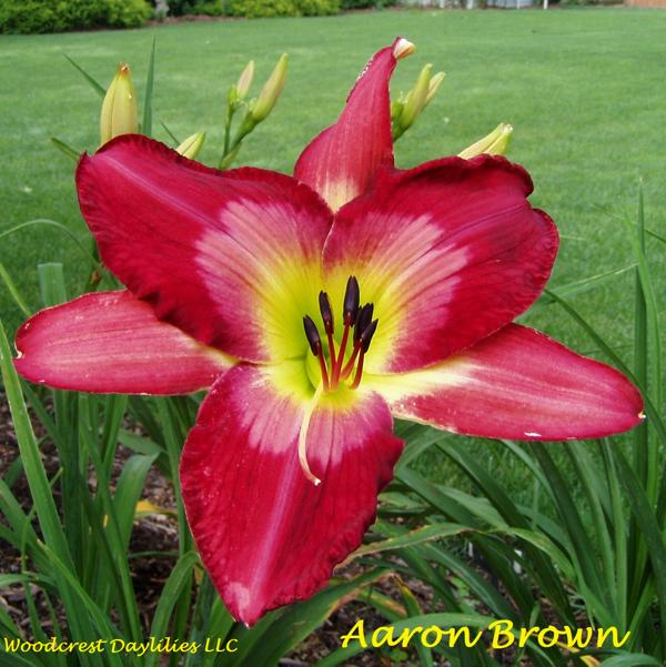 AAron Brown 1
