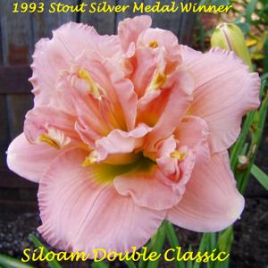 Siloam Double Classic - 1993 Stout Silver Medal Winner
