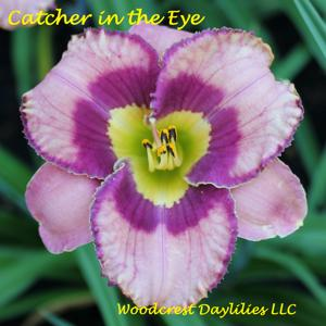 Catcher in the Eye
