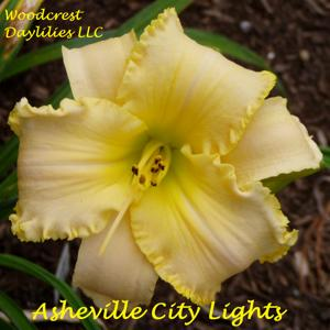 Asheville City Lights