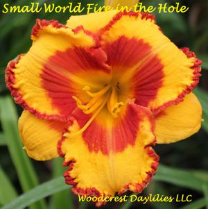 Small World Fire in the Hole