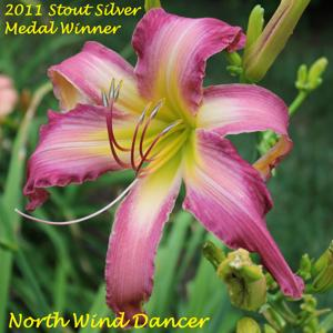 North Wind Dancer - 2011 Stout Silver Medal Winner