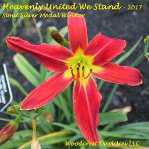Heavenly United We Stand - 2017 Stout Silver Medal Winner