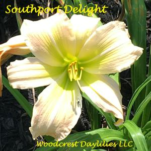 Woodcrest Daylilies Llc Plants