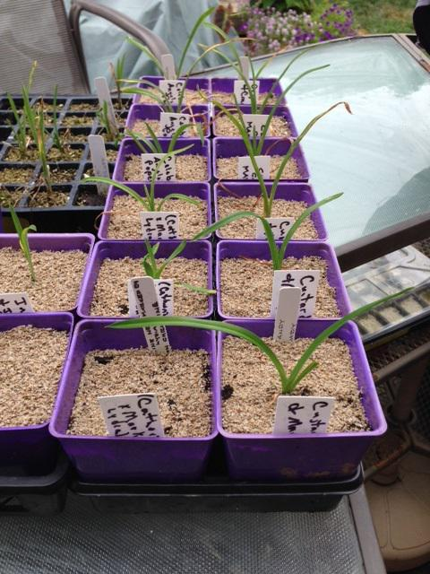 Seedling pots ready to replant